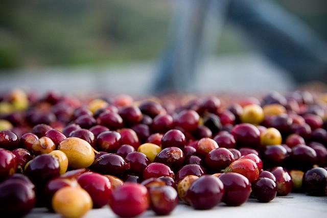 Kawa Fair trade, fot. jakeliefer/flickr CC BY 2.0