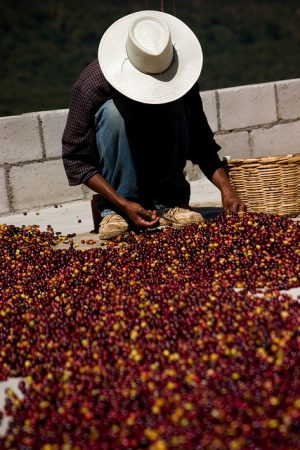 Kawa Fair trade, fot. jakeliefer/flickr CC BY 2.0